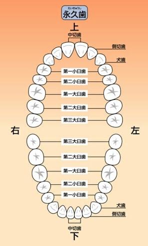 image.jpg1/13